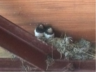 Swallows at reception